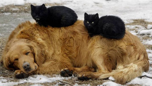 chiencoussin6