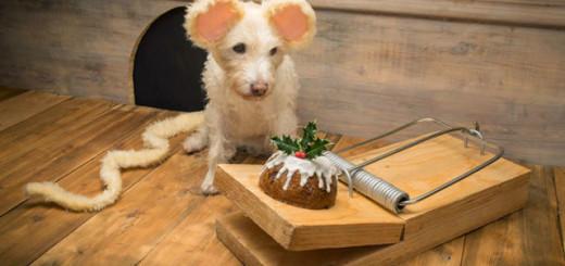 Non vous ne rêvez pas cette petite souris est en réalité un chien ! 7
