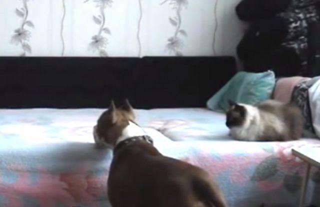 """""""Quand le chat n'est pas là, les souris dansent !"""""""