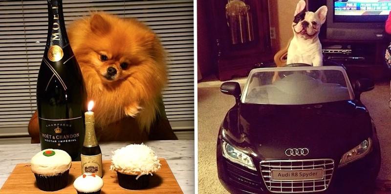 Ces 24 chiens de millionnaires vont vous rendre jaloux ! 26