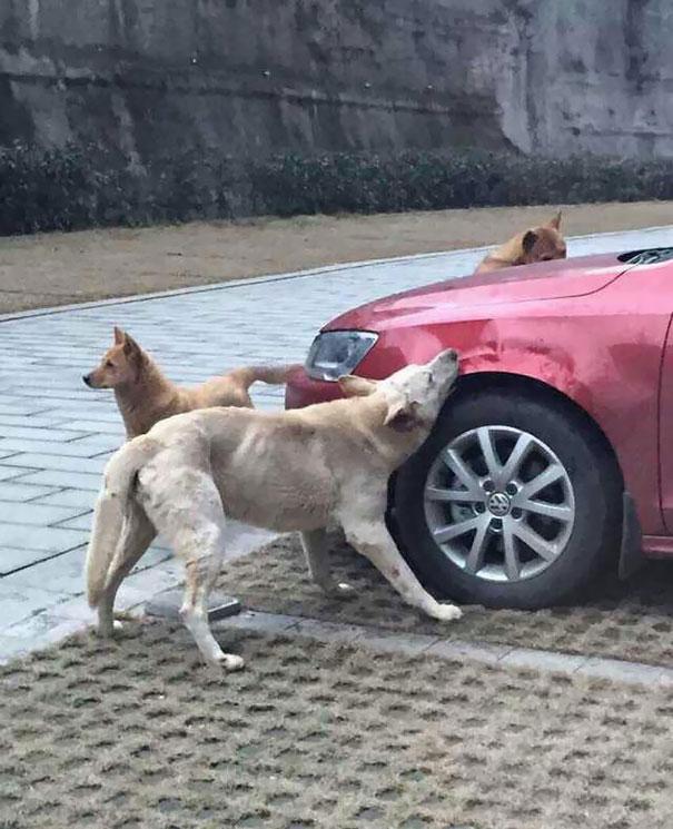 chiens-vengeance-chakipet-1