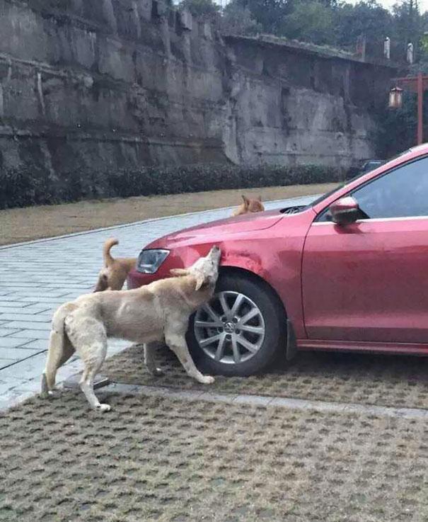 chiens-vengeance-chakipet-2