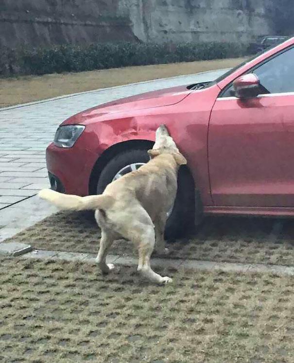 chiens-vengeance-chakipet-4