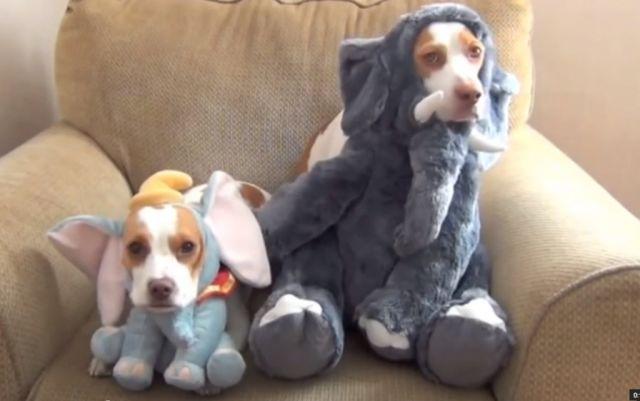 EXTRA : ces deux chiens sont les rois du déguisement !