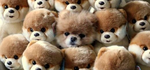 Voici 20 chiens qui jouent à cache-cache 2