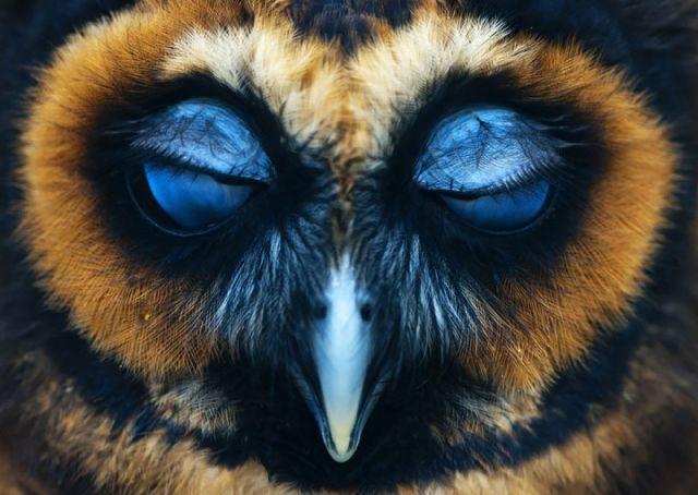 25 Superbes photos de chouettes et d'hiboux en pleine action 17