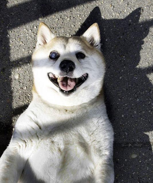 cinnamon-chien-heureux-5