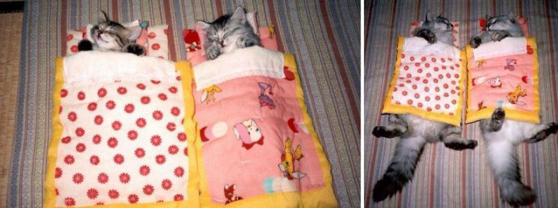 AVANT/APRES : ces chats ont bien grandi ! 12