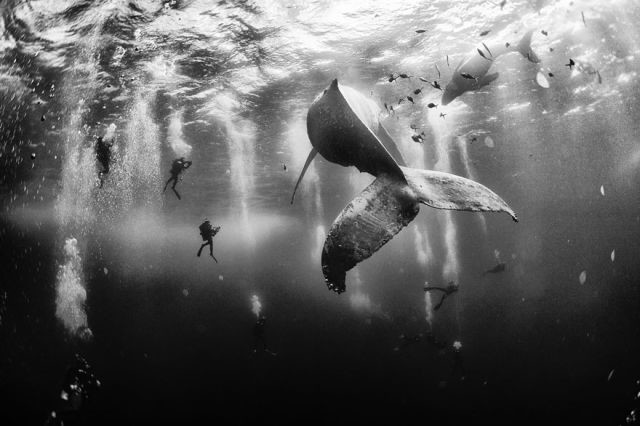 concours-photo-national-geographic-2015-1