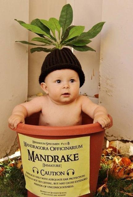 costume-halloween-bebe-13