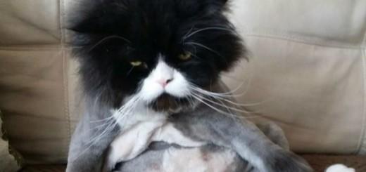 Les 15 coiffures les plus folles pour animaux 14
