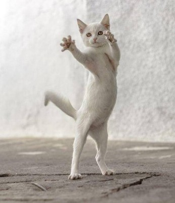 danse-animaux-chakipet-1