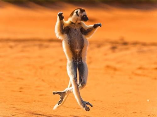 danse-animaux-chakipet-10