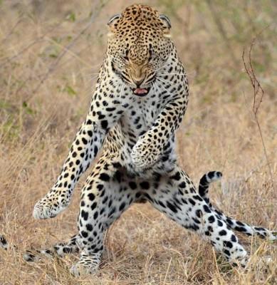 danse-animaux-chakipet-19