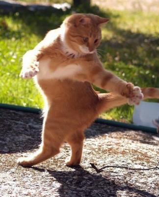 danse-animaux-chakipet-21