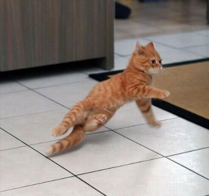 danse-animaux-chakipet-6
