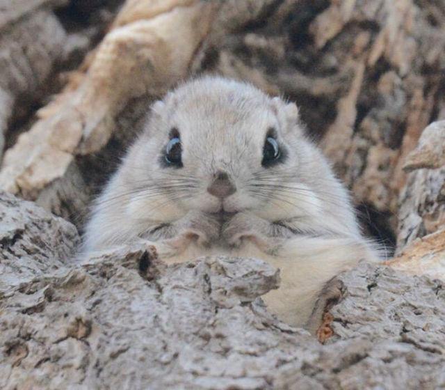 ecureuil-siberie-japon-1