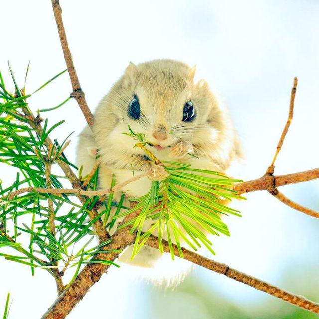 ecureuil-siberie-japon-10
