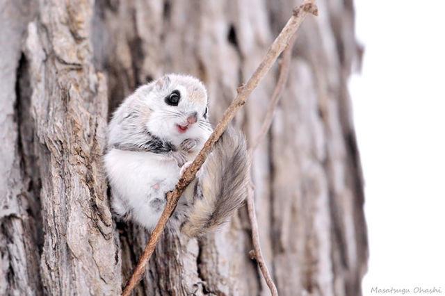ecureuil-siberie-japon-12