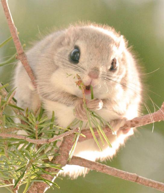 ecureuil-siberie-japon-7