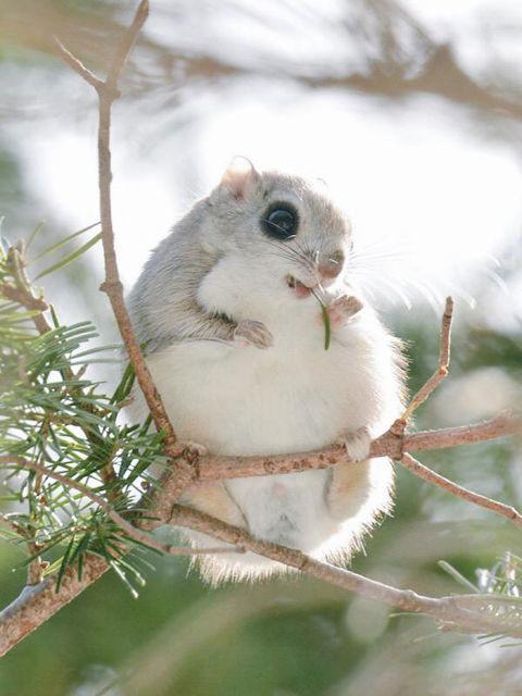 ecureuil-siberie-japon-9
