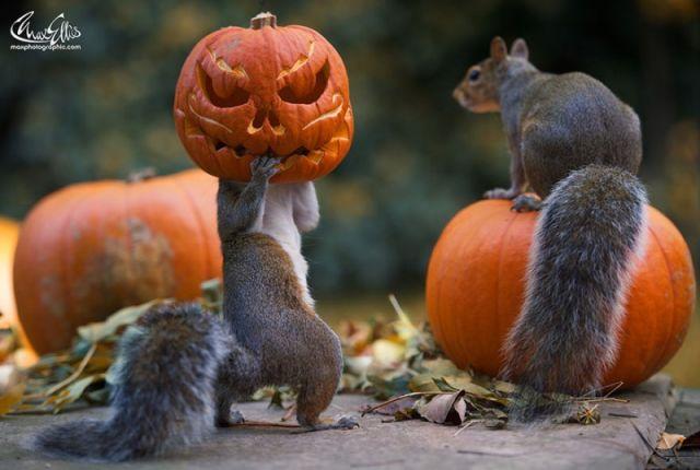 Non, ce n'est pas un photo montage ! L'écureuil l'a vraiment fait ! 2