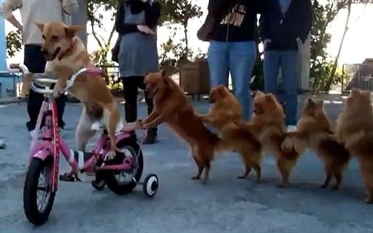 EXTRA : La farandole des chiens ! 4
