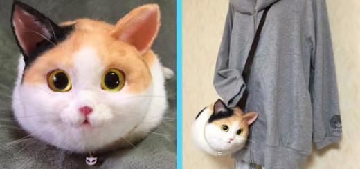 chats sac main
