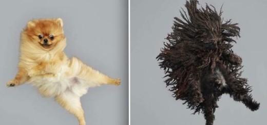 Les 15 chiens volants de la photographe Julia Christe 16