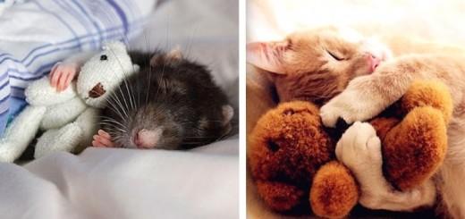 15 photos touchantes d'animaux avec leurs doudous 16
