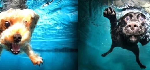 20 photos excellentes de chiens sous l'eau 23