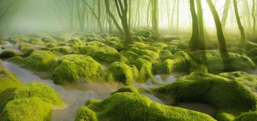 Voici 15 forêts mystérieuses où vous adorerez vous perdre ! 14