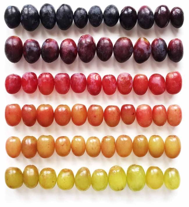 Des fruits et légumes hauts en couleurs 11