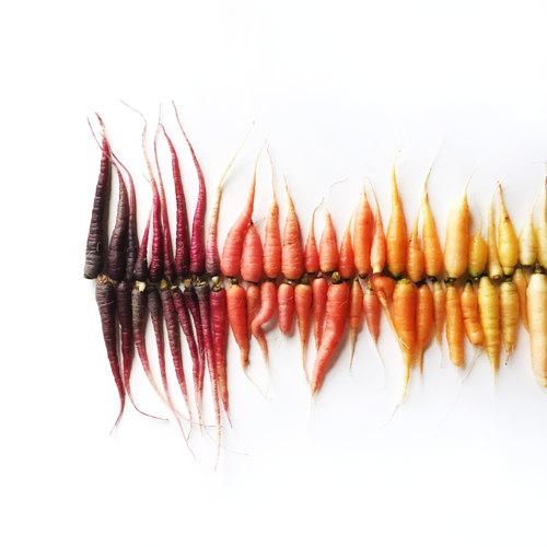 Des fruits et légumes hauts en couleurs 3
