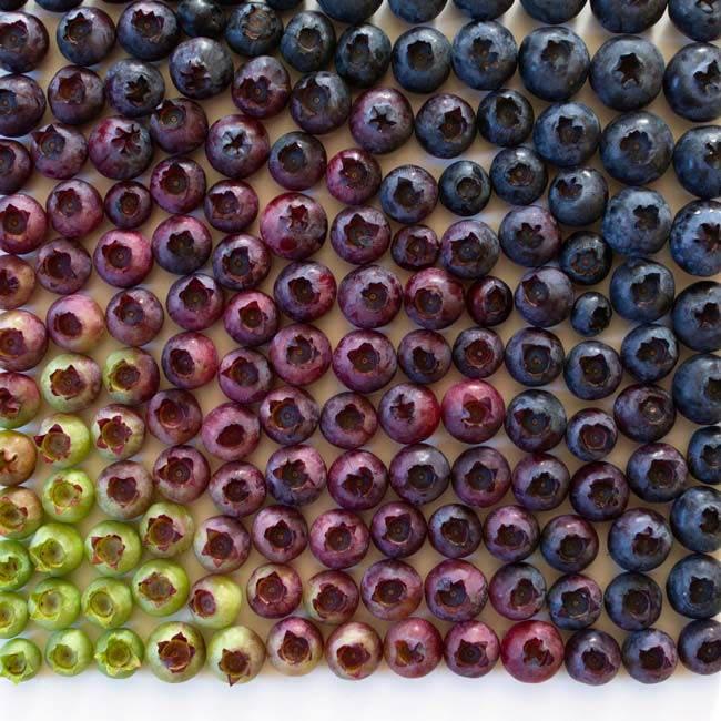Des fruits et légumes hauts en couleurs 6