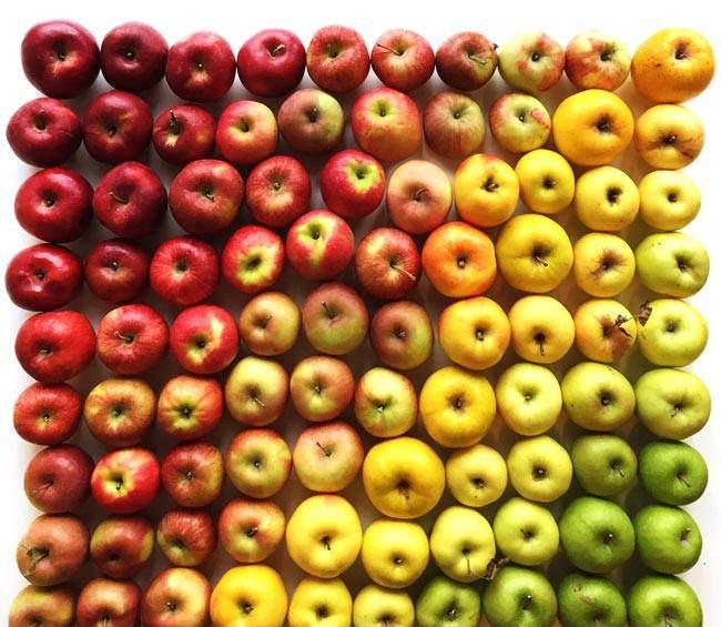 Des fruits et légumes hauts en couleurs 7