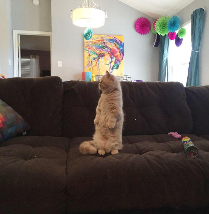 Rencontrez George, le chat qui se tient toujours sur deux pattes 3