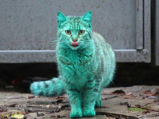Ce chat est d'une couleur bien étrange ... 3
