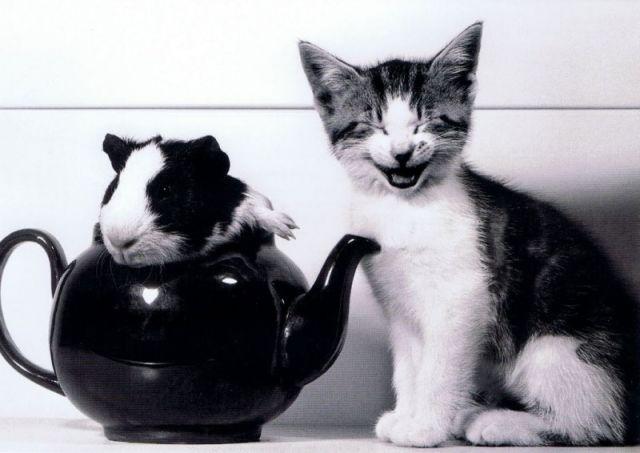 Les animaux aussi peuvent être heureux : la preuve en images ! 21