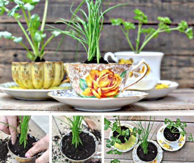 jardin miniature16