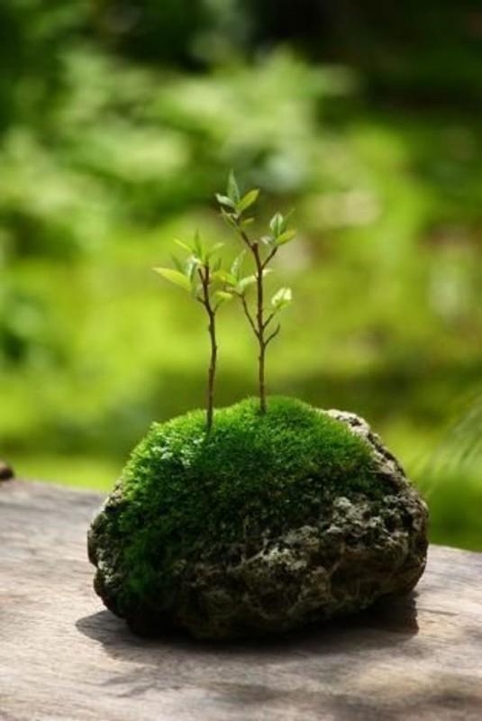 jardin miniature17