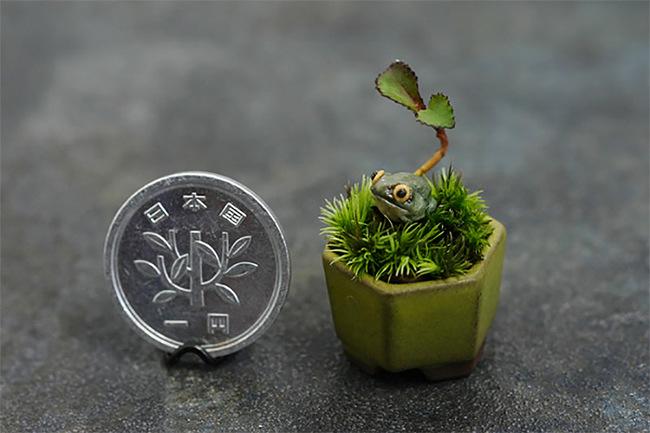 jardin miniature21