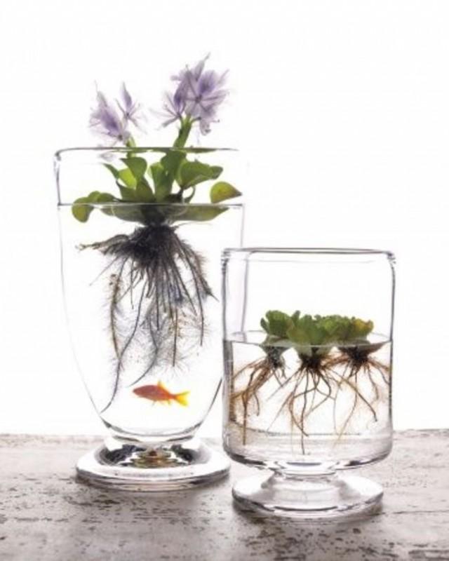 jardin miniature25