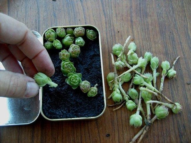 jardin miniature3
