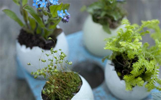 jardin miniature4
