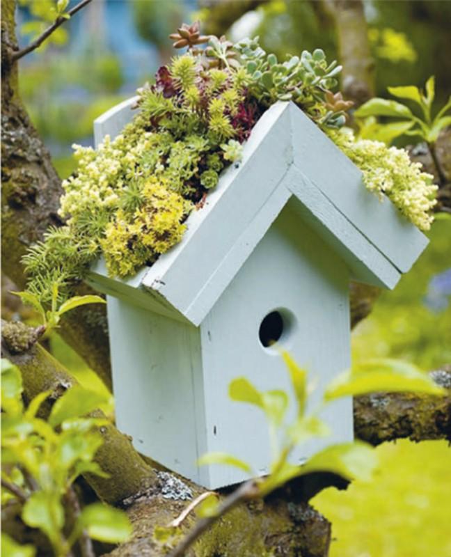 jardin miniature5
