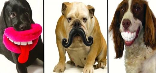 25 chiens qui ont l'air idiot avec leurs jouets 26