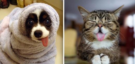 HILARANT : ces 24 animaux ont la langue bien pendue ! 25