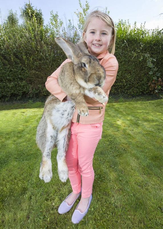 le plus gros lapin du monde 4