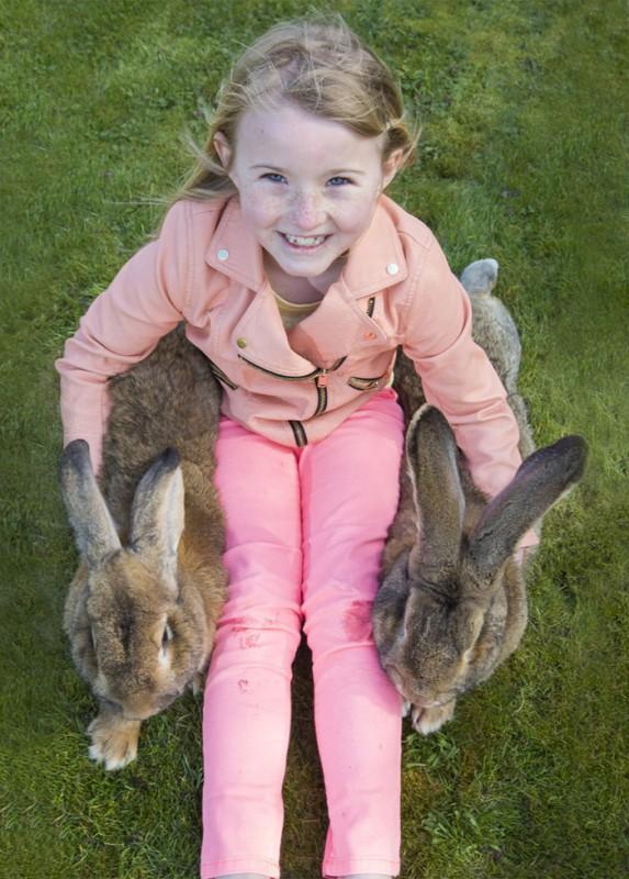 le plus gros lapin du monde 5